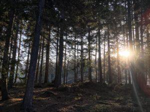 Waldfoto-Holzhaus--300x225 sanierung - Waldfoto Holzhaus  300x225 - Sanierung und Erweiterung einer Almhütte sanierung - Waldfoto Holzhaus  300x225 - Sanierung und Erweiterung einer Almhütte